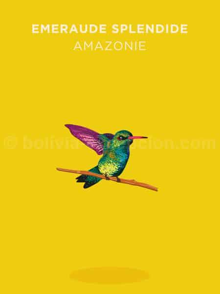 Emeraude splendide, Amazonie