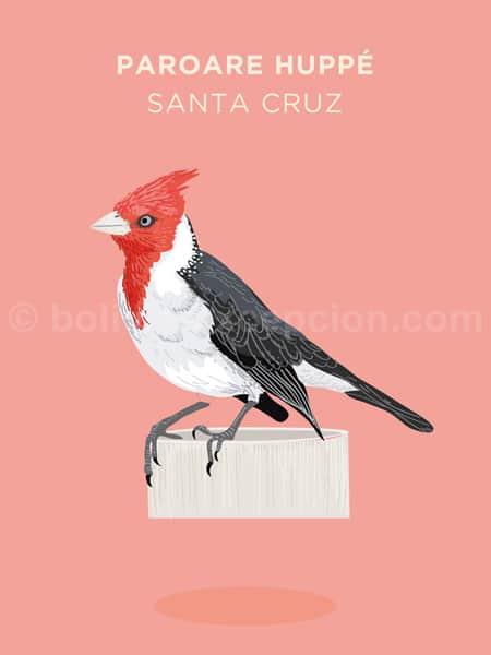 Paroare huppé, Santa Cruz