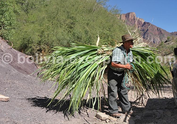 Scènes paysannes, Bolivie