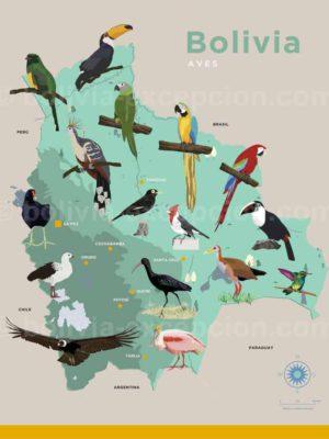 Oiseaux de Bolivie