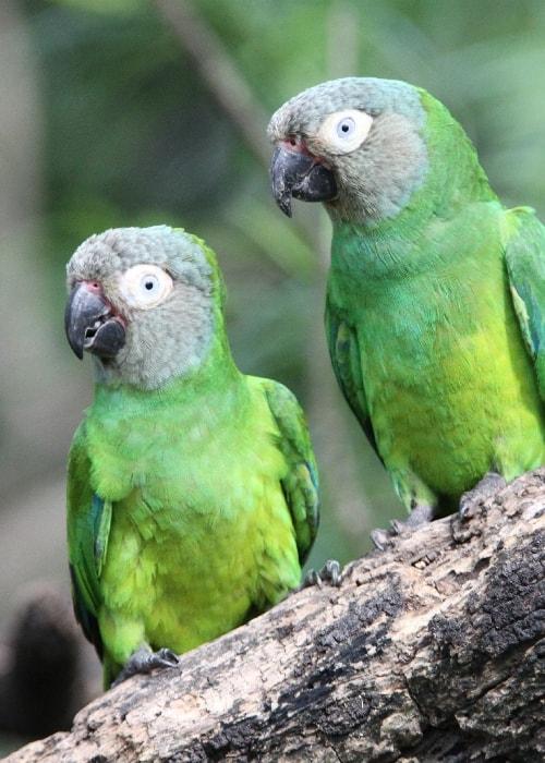 Faune aviaire de Bolivie