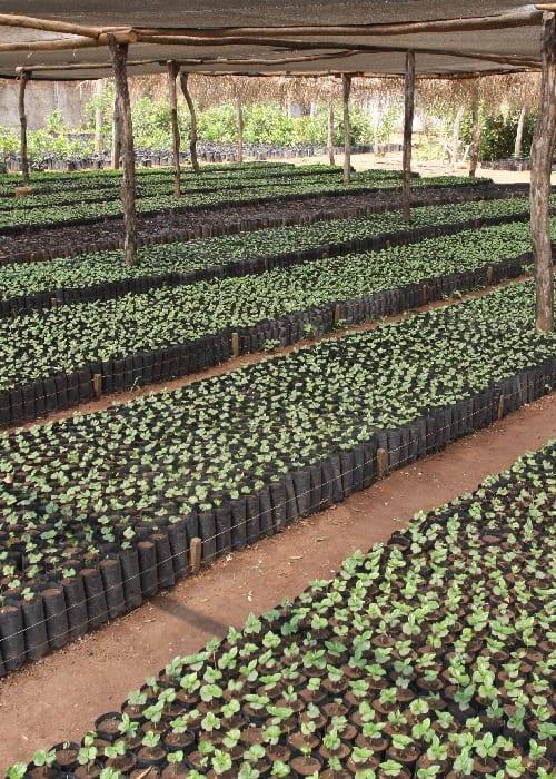 L'économie du café en Bolivie