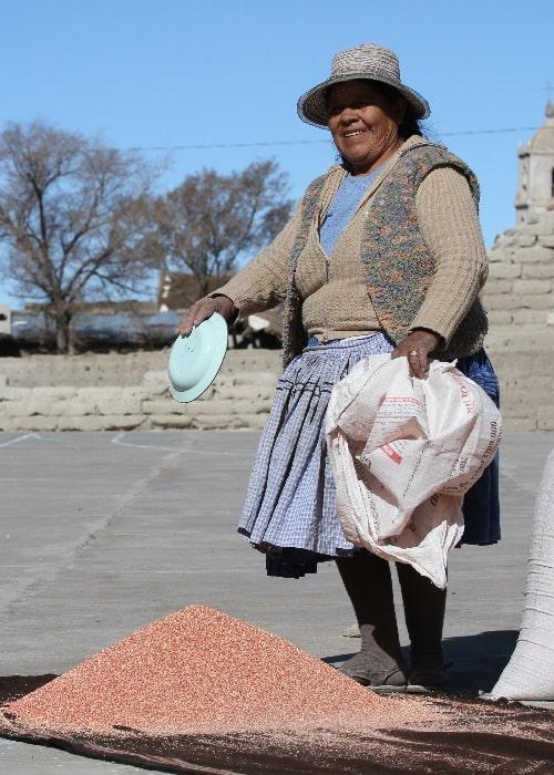 Le quinoa en Bolivie 1