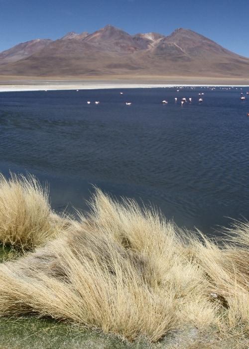 Parcs et réserves de l'Altiplano bolivien