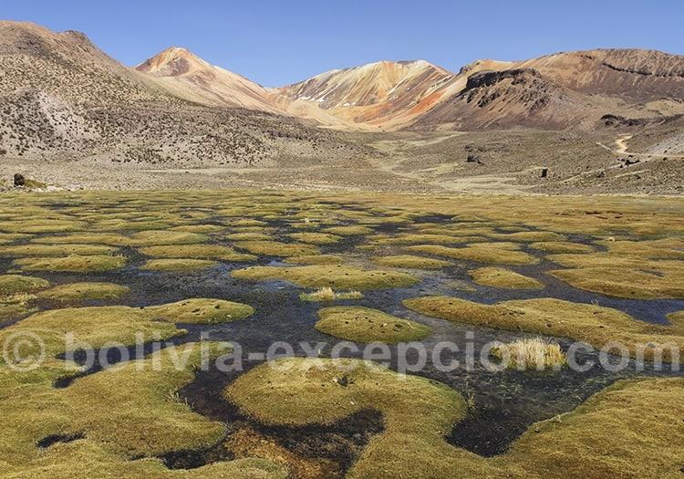 Excursion dans les cerros Suriplaza, zone Visviri