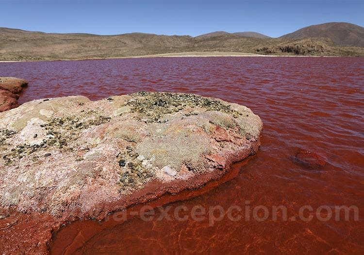 Expédition à la laguna Roja, hors des sentiers battus
