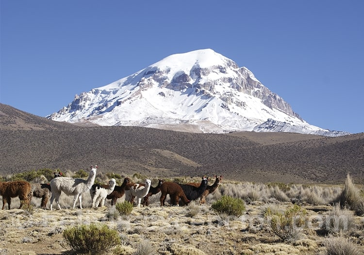 Parc national Sajama, Bolivie