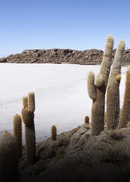 Cactus dans desert de sel blanc et ciel bleu