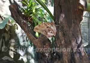 Papillon, Biocentre Guembe