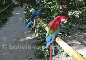 Parc des Oiseaux, santa Cruz de La Sierra