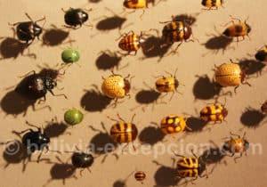 Chrysomelidae et Tenebrionidae