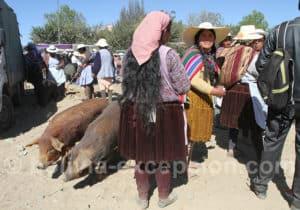 Marché au bétail de Punata tous les mardis