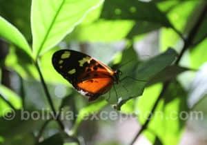 Jardin aux Papillons au Biocentre Guembe