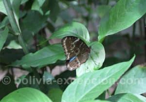 Papillonneraie, Biocentre Guembe