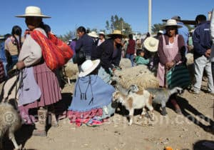 Marché au mouton de Cliza