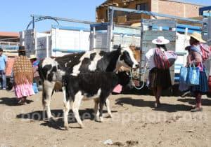 Marché aux bestiaux, valle Alto