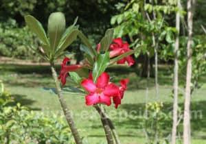 La flore au Biocentre Guembe