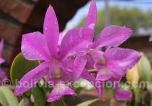 Biocentre Guembe, jardin aux orchidées