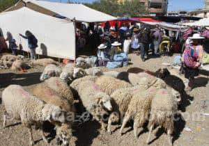 Marché au bétail de Punata