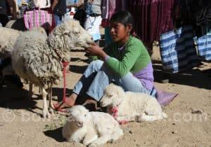 Corderos au marché de Cliza