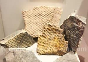 Apillapampa fossilisés