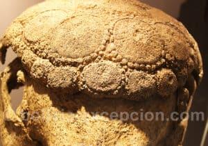 Gliptodonte fossilisé