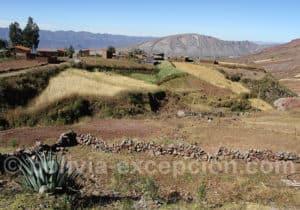 Paysage agricole sur la route de la Ciudad de Itas