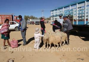 Marché au bétail de Cliza
