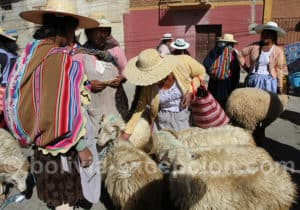 Commerce d'ovins, marché de Punata