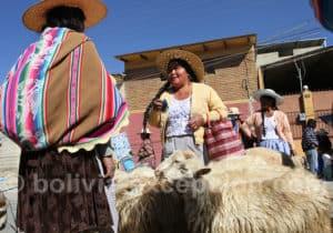 Marché aux moutons à Punata