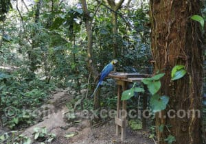 Promenade au Biocentre Guembe, région de Santa Cruz