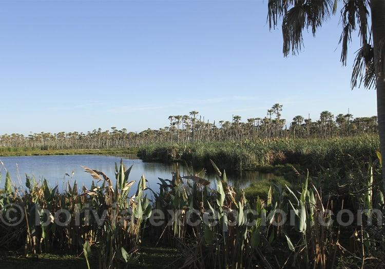 Le Pantanal bolivien