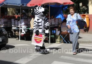 Zebre Bolivien