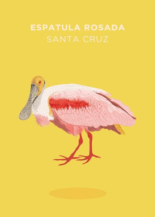 Bolivia-Aves