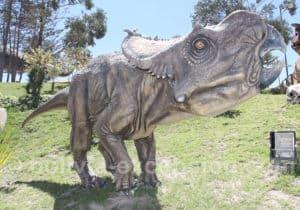 Ceratopsian parc Orcko