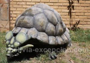 Meiolanid Turtle parc Orcko