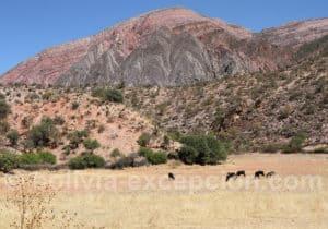 Région d'Anzaldo, Bolivie