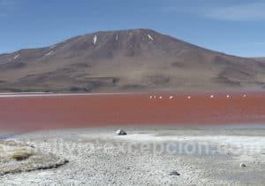 Lagune Colorada, route des Joyaux