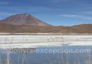 Lagune Chiarcota route des Joyaux