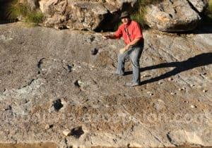 Ankylosaure Torotoro