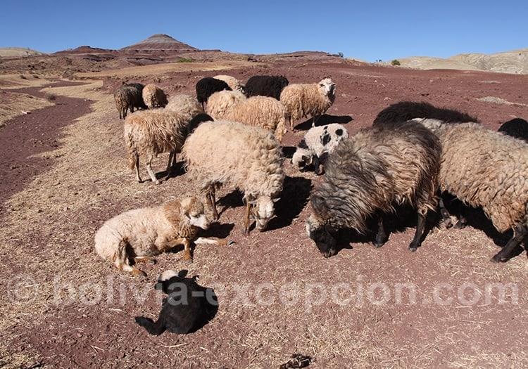 Aôut excellent mois pour visiter toute la Bolivie
