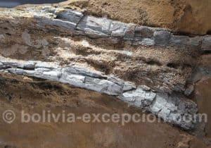 Fémur ou tibia de Sauropode
