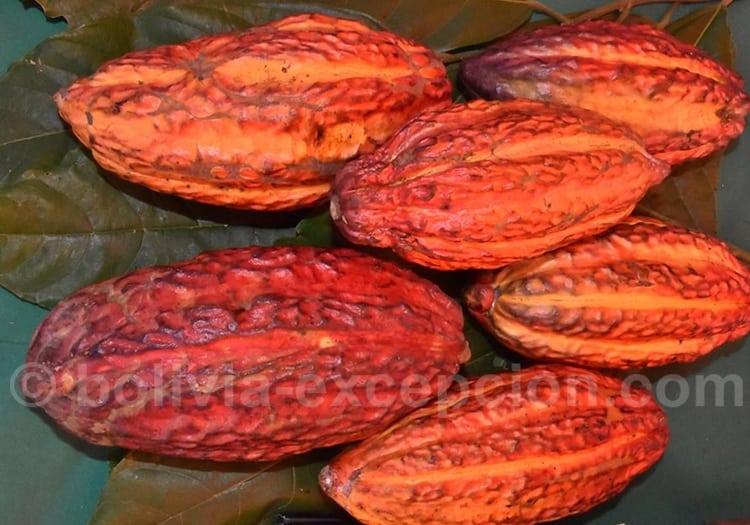 Fruits et couleurs de Bolivie