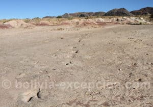 Hadrosaure Carreras Pampas Torotoro