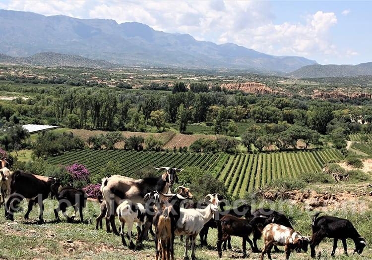 Juin foire au vin à Tarija, en Bolivie