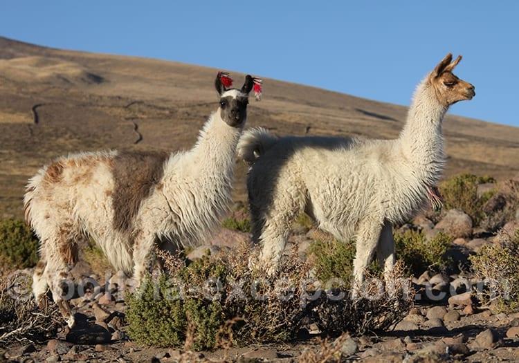 La Bolivie en octobre