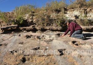 Sauropode, rio Toro Toro
