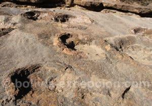 Sauropode rio Toro Toro