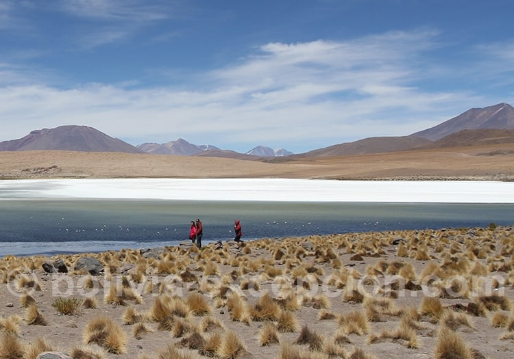 Trekking Lagune Chiarcota, Lipez