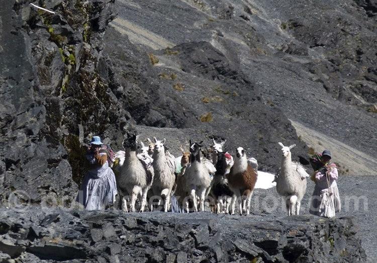 Trekking dans la Cordillère Royale Bolivie